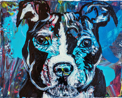 dog 5 (2016)