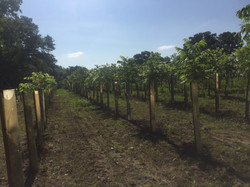 Tree Planting1