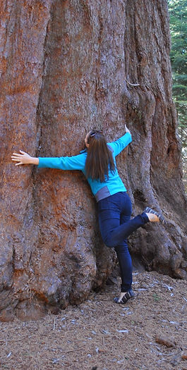 KFA Program Director loves Sequoias