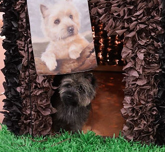 Cairn Terrier Club of Denver Specialty Doghouse