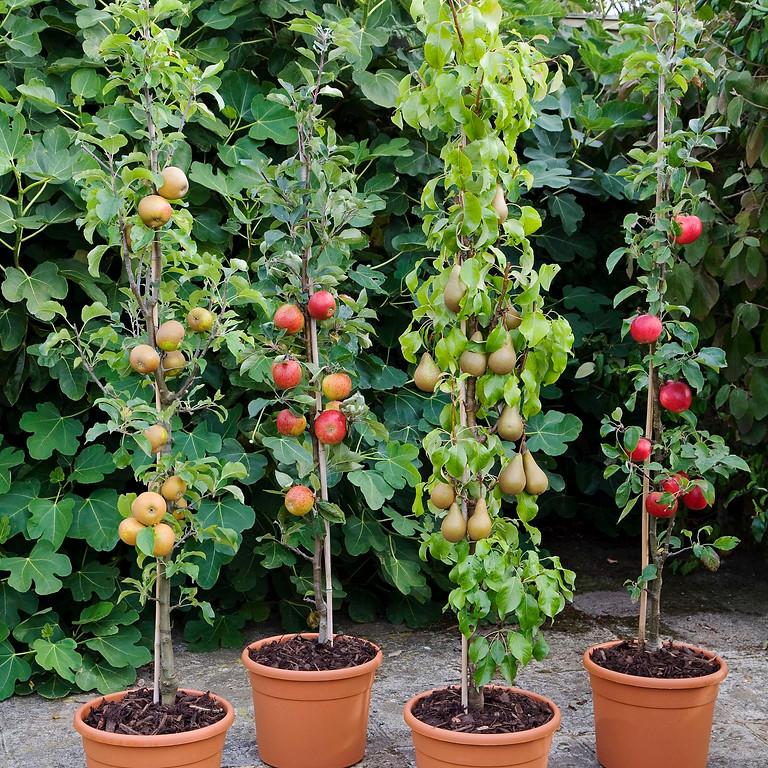 March Masterclass - Fruit Tree Grafting