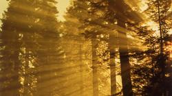 Golden Glow.jpg