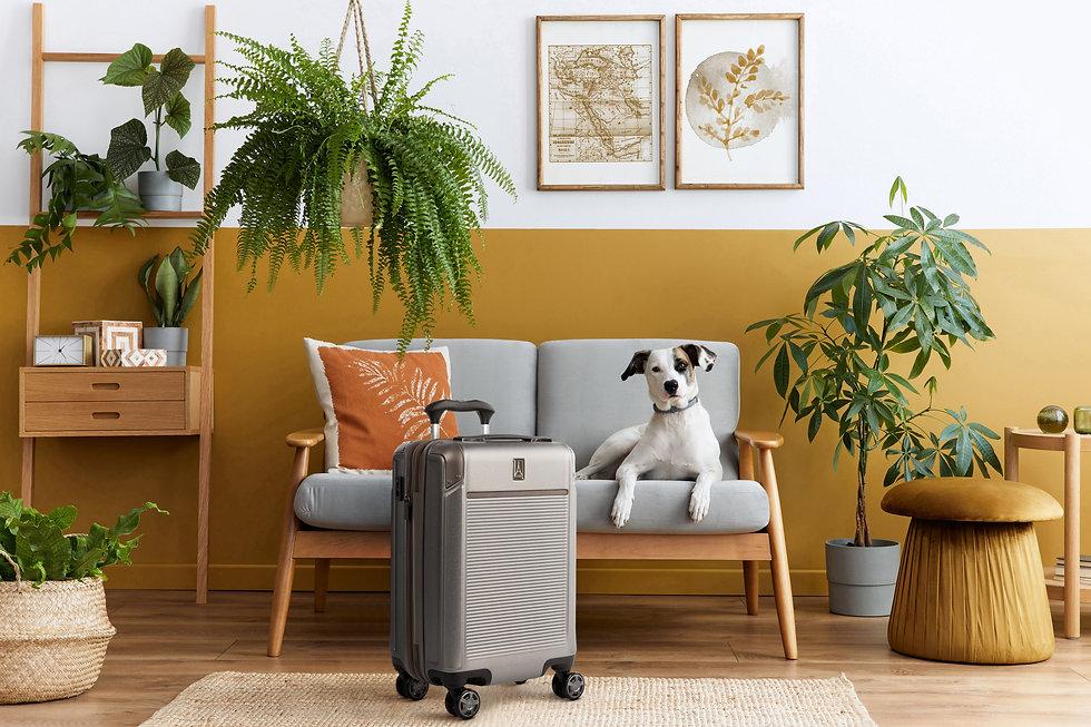 PEHS Metallic Sand Dog Living room.jpg