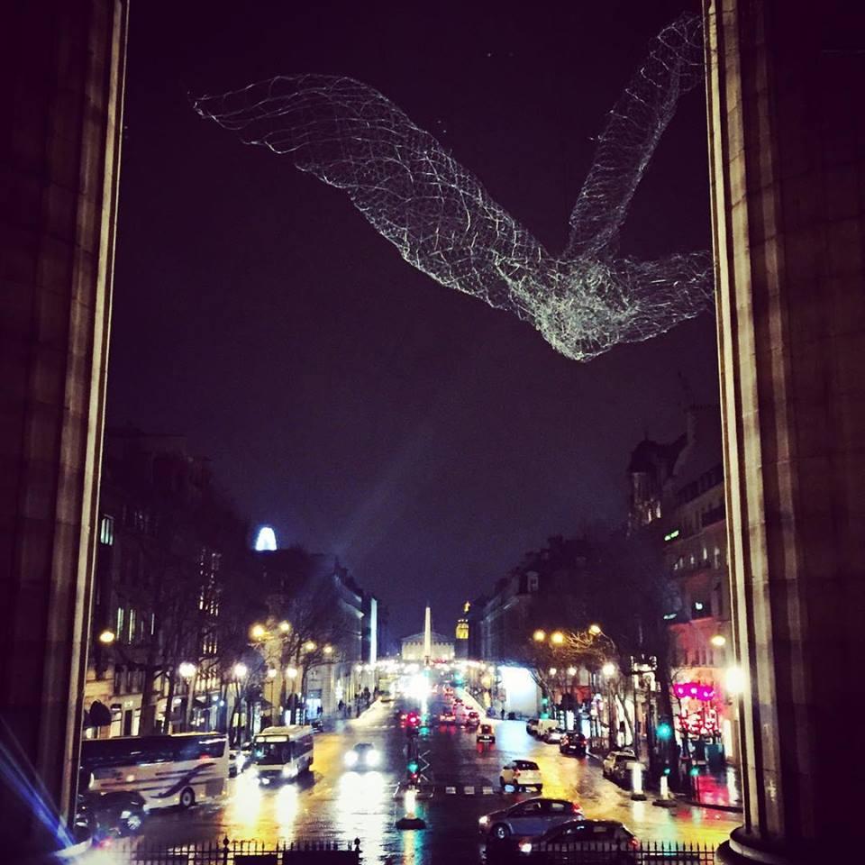 Oiseau s'envolant de la Madeleine