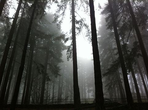 trees & fog 2.jpg