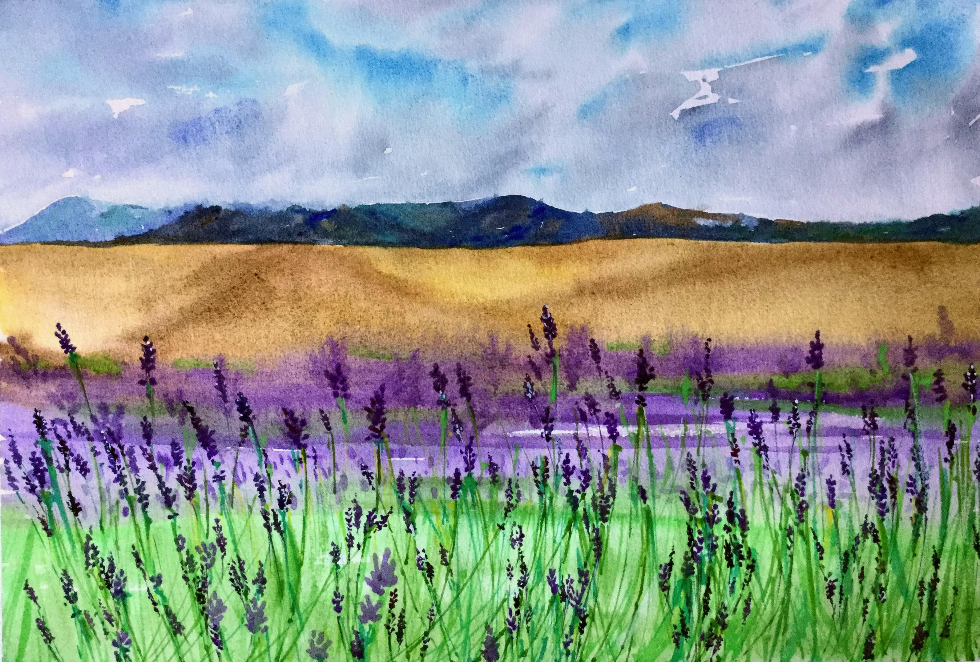 Lavender Farm Closeup - South Island NZ