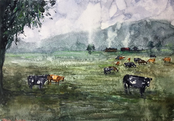 Misty Grazing Hours - Palmerston North