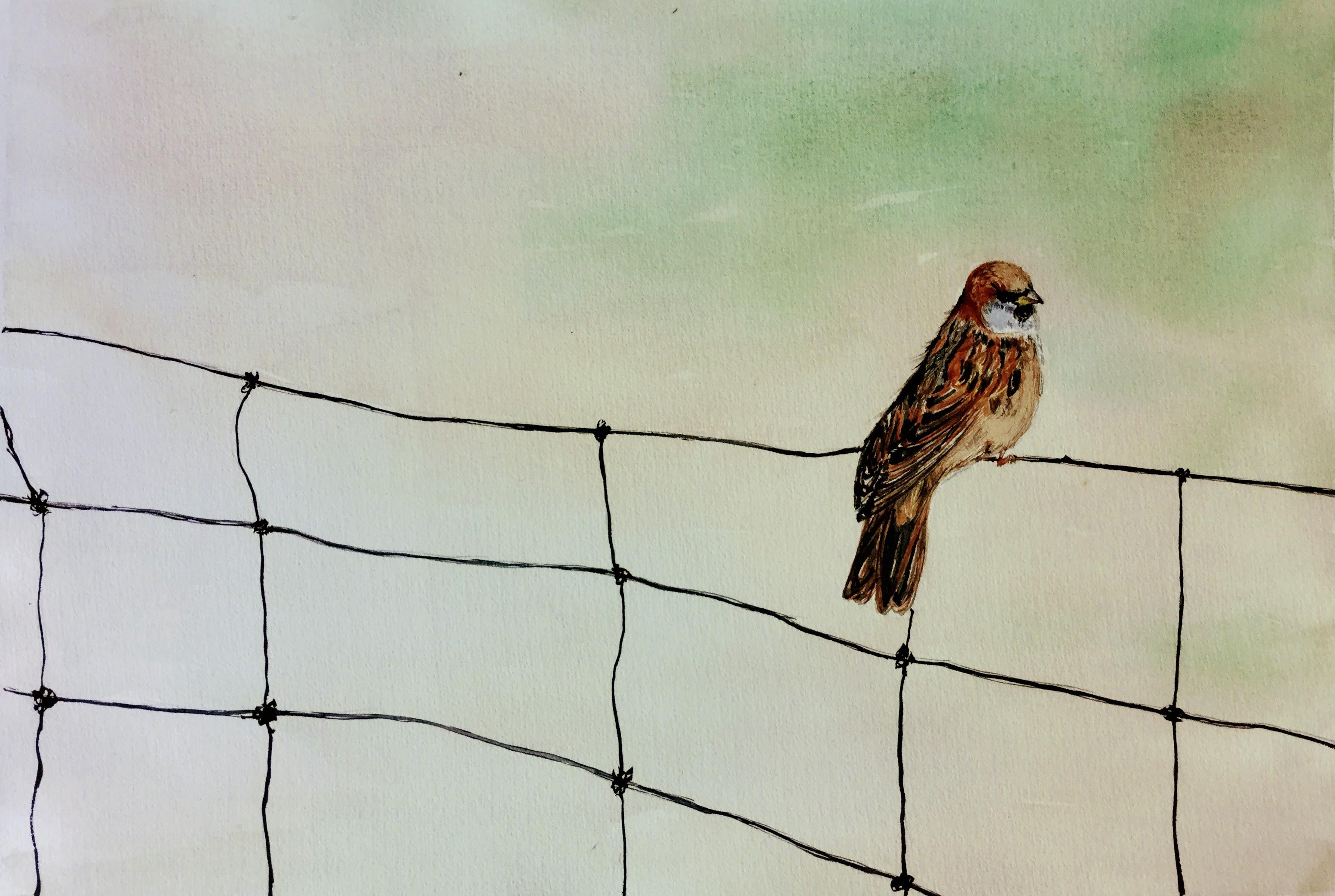 Alone but High Head - Sparrow