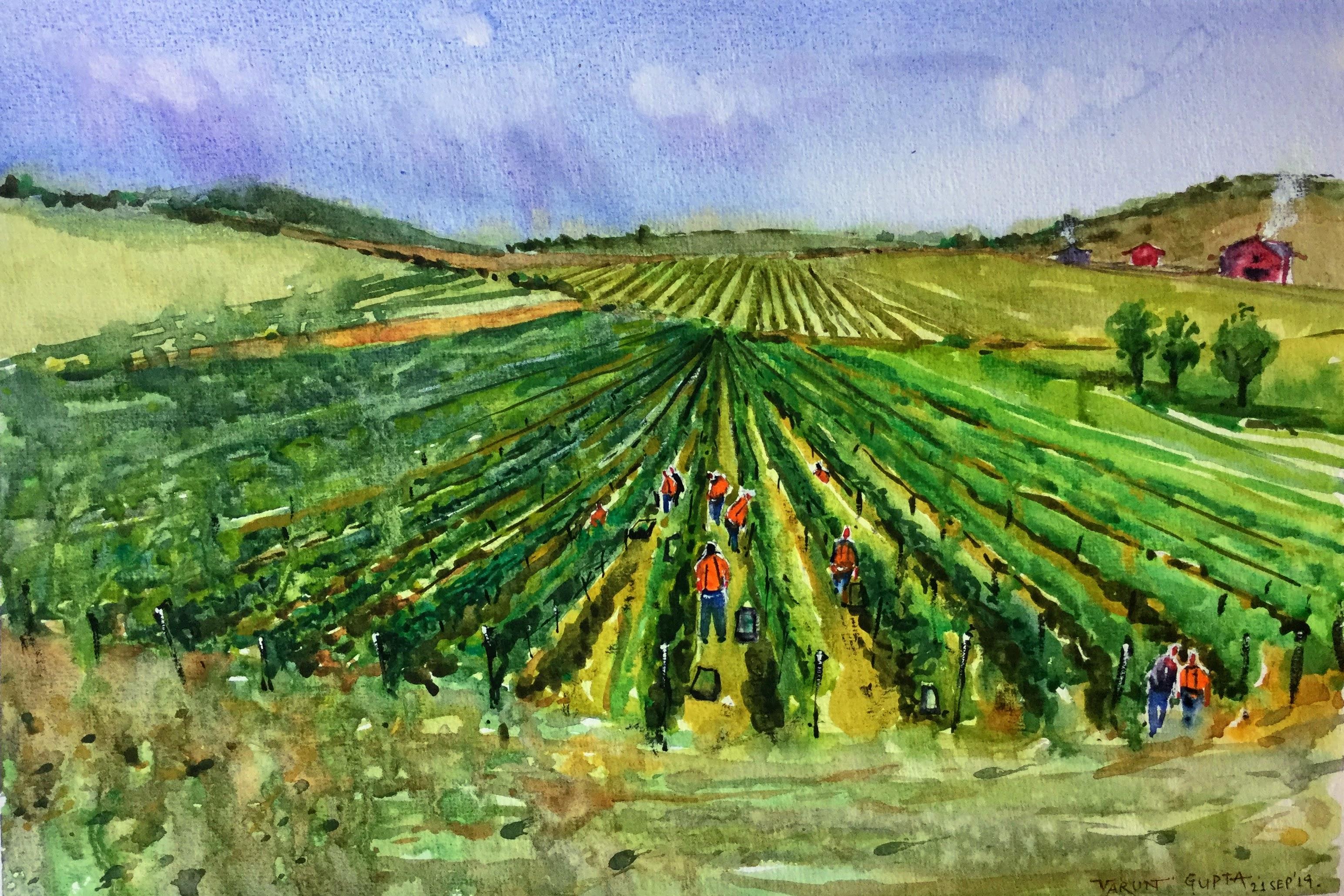 Wineries Marlborough NZ