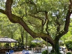 Oak Shade.jpg