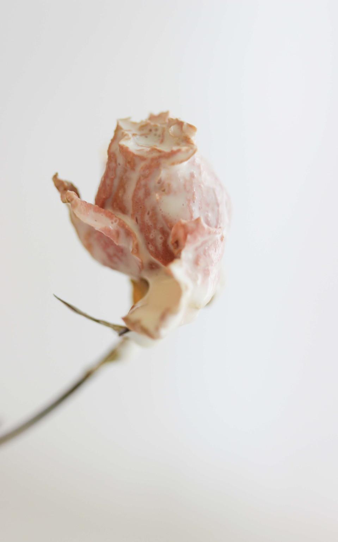 NMills-Rose.jpg