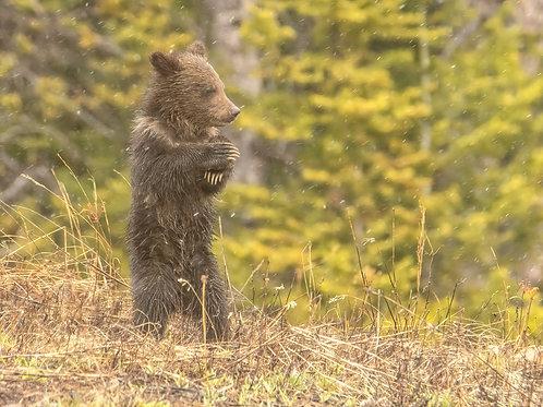 Bear cub prayer