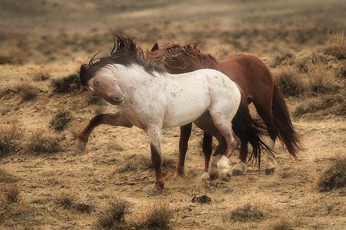 Stallion gesture