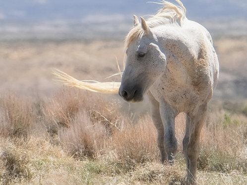 Light of a stallion