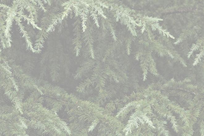 pine-tree-background_edited.jpg