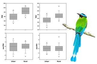 Urban birds FD.jpg