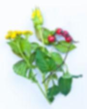 red berries elisif- bouquetsEdit.jpg