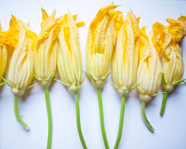 yellow squash flowers.jpg
