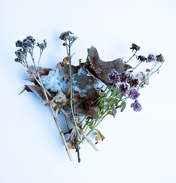 december frozen bouquet.jpg