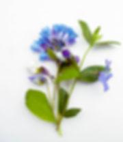 Seasonal bouquets for website-5.jpg