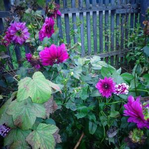 садовые радости.jpg