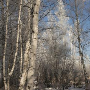 Первый снег -3.jpg