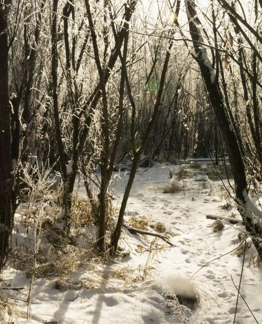 Первый снег -2.jpg