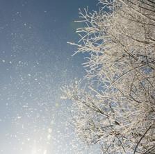 Первый снег -4.jpg