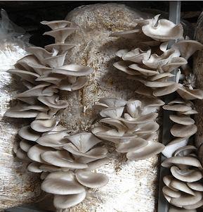 mushroom_edited.jpg