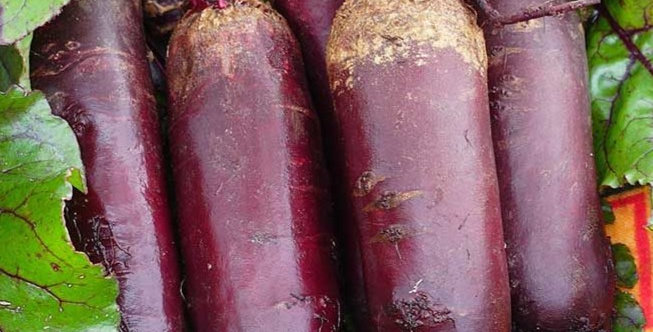 Beetroot 'Southern Long'