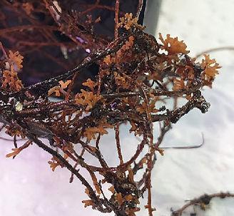 mycorhizas.jpg