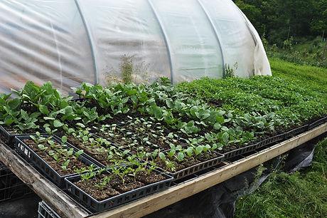 Seedlings5-13-12.jpg