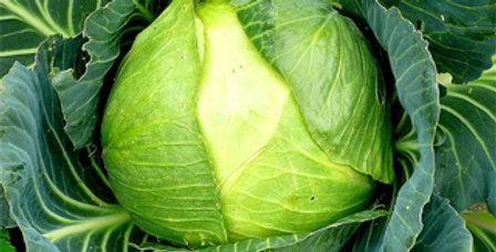 Cabbage 'Kraut Head'