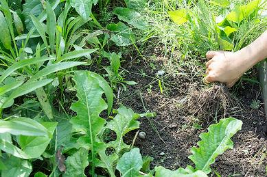 weeds1_edited.jpg