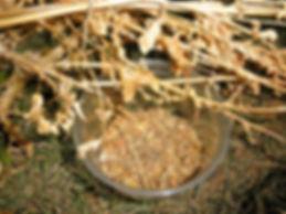 seed-bowl.jpg