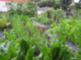 garden pic_0.jpg