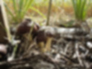 mushroom-filter.jpg