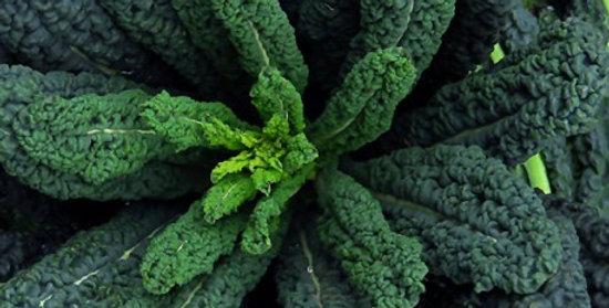 Kale 'Cavolo Nero'