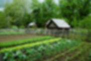 Garden-Plot_edited.jpg