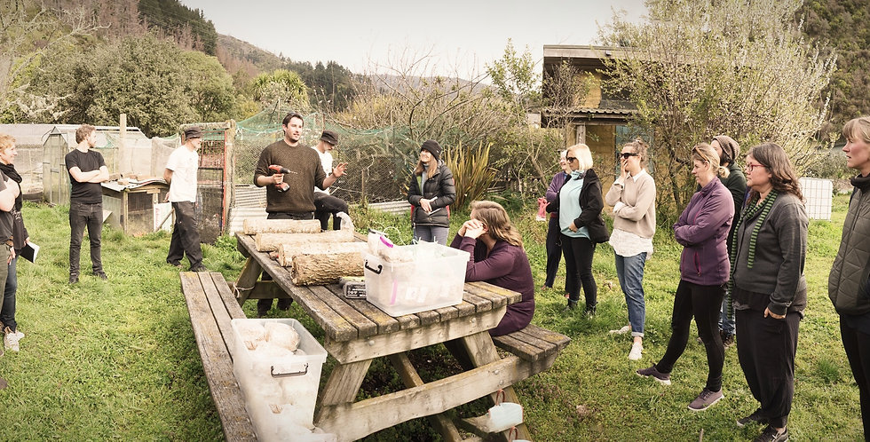 Mushroom Cultivation Workshop - Dunedin