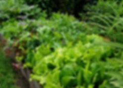 leafs_edited.jpg