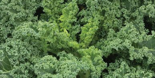 Kale 'Curly'