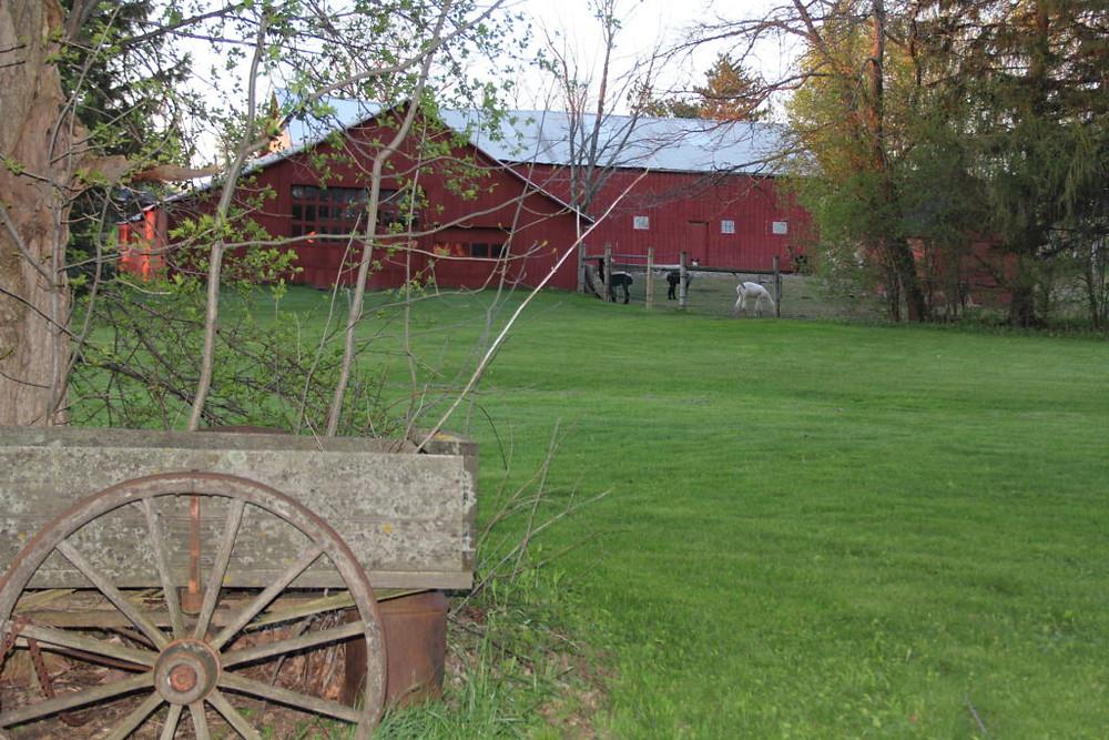 Hillcrest Farm, Hillcrest Alpaca Farm, Upstate NY Alpacas, Alpacas, Alpaca,