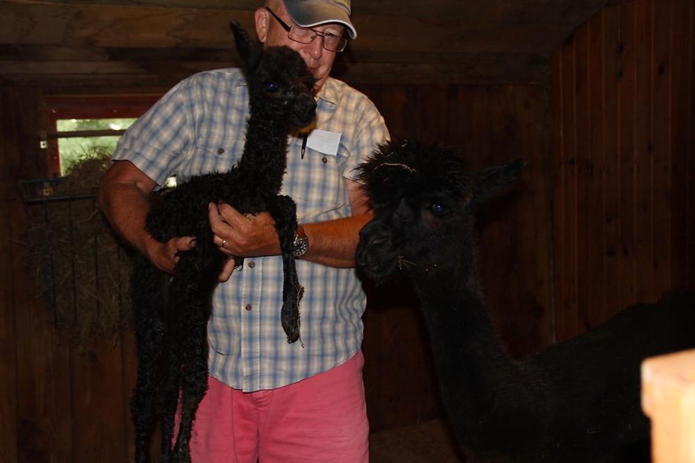 Hillcrest Farm, Alpaca, Alpacas, Hillcrest Alpaca Farm, Upstate NY Alpacas, Sauquoit NY