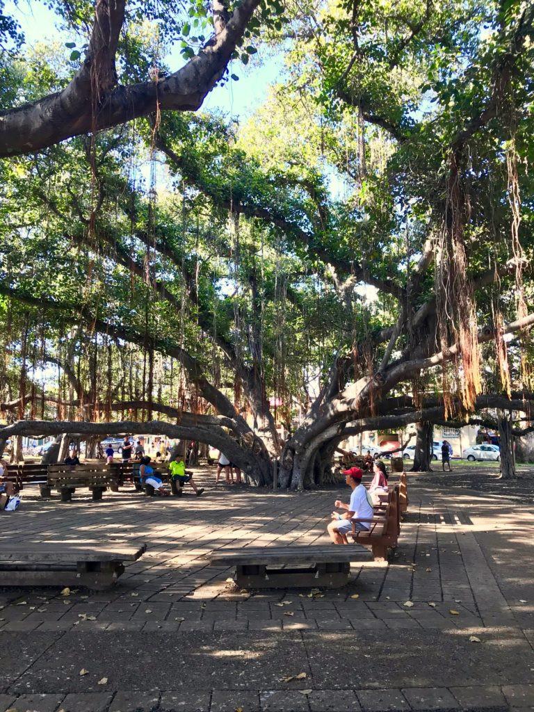Lahaina Maui, Maui, Maui Hawaii, Lahaina Banyan Tree