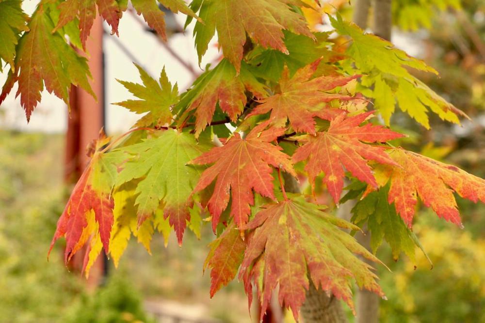 Maine, New England Fall