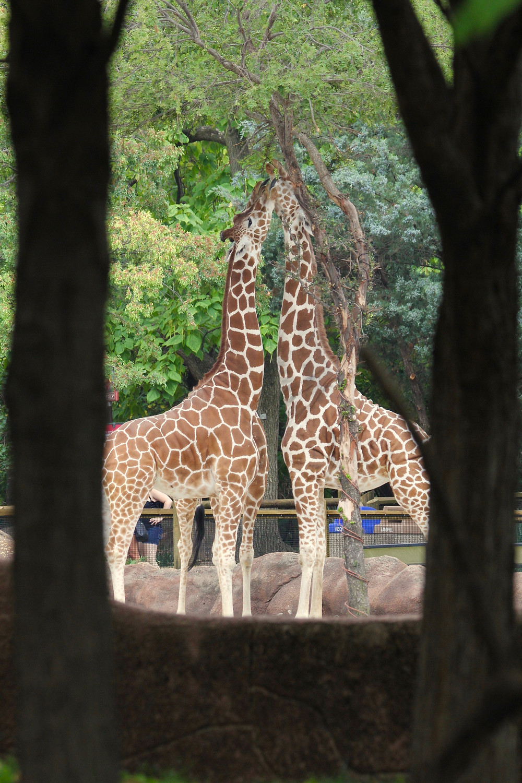 St Louis Zoo, Zoo St Louis