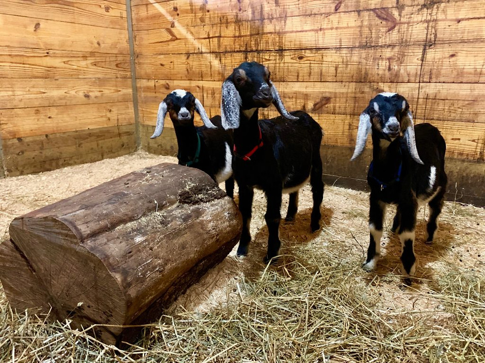 hydroponic greens, the root farm, central ny, upstate ny, sauquoit NY, adaptive, equine program, hiippotherapy, vaulting, therapeutic, agriculture program, accessible adventure, free roaming chickens