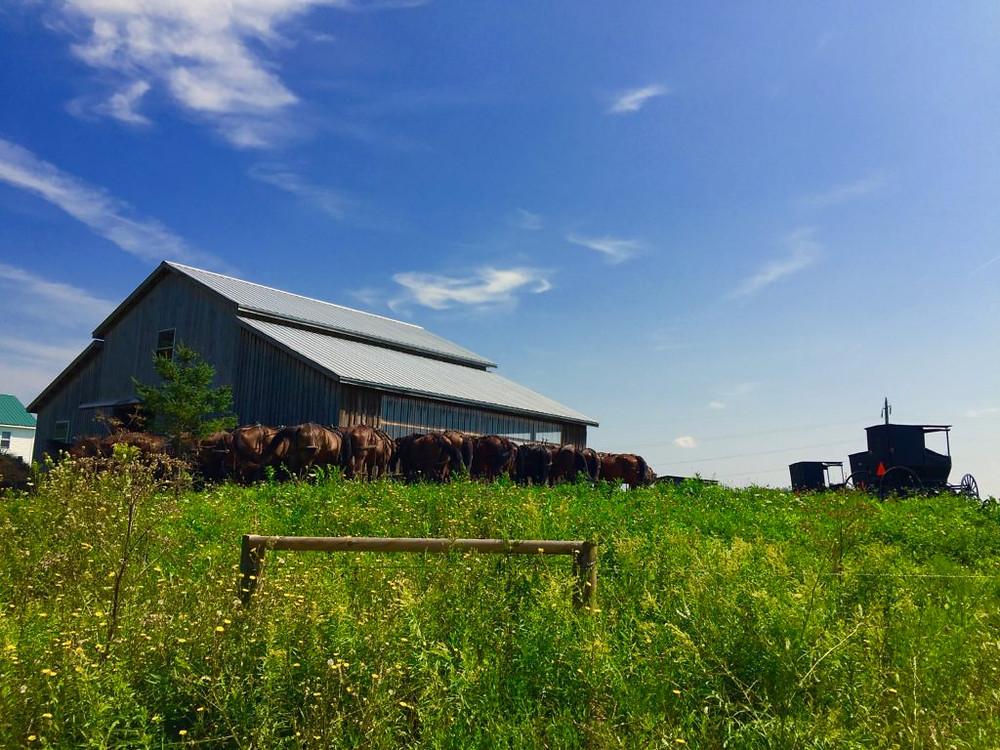 Central NY, Upstate NY, Amish Country, New York State, New York, New York Amish