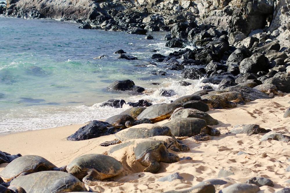 Turtle Beach, Ho'okipa Beach Park Maui, maui, maui hawaii